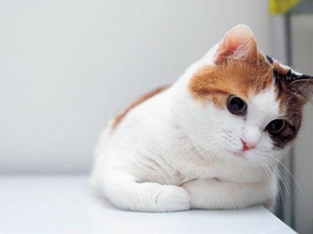 Cute Cat iPad mini Wallpaper iPad Retina HD Wallpapers 1024x768