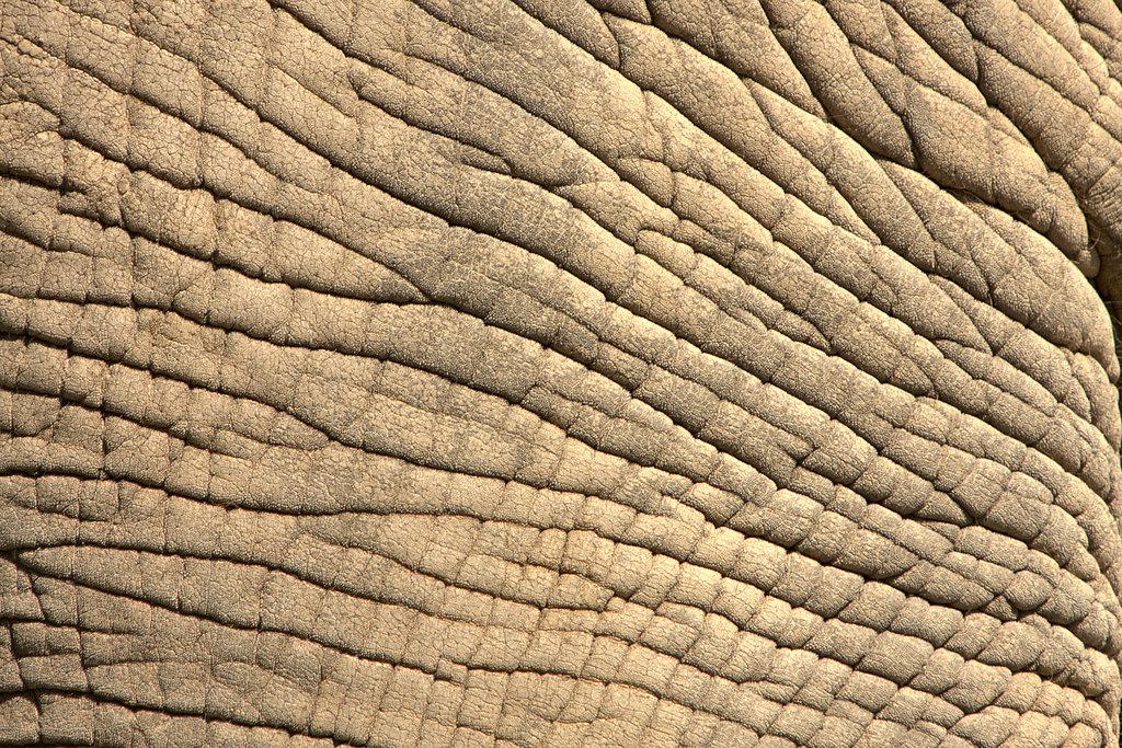 Elephant Skin by BonsEYE 1024x683