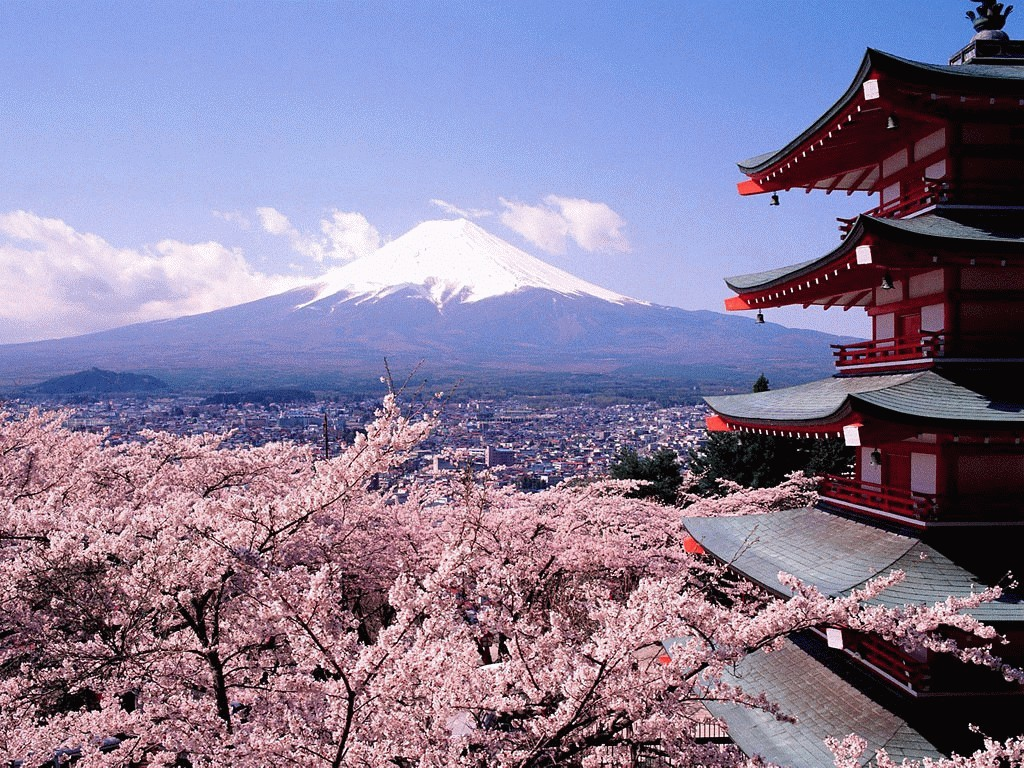 Blossoms And Mount Fuji Japan Desktop Wallpapers and stock photos 1024x768