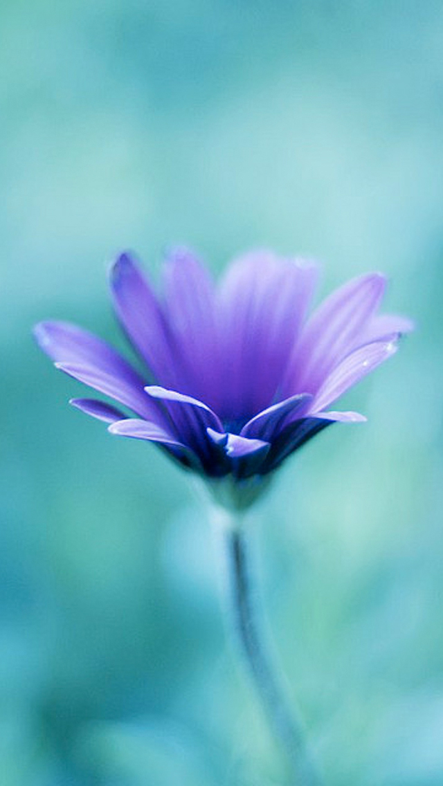 gallery for purple floral iphone wallpaper