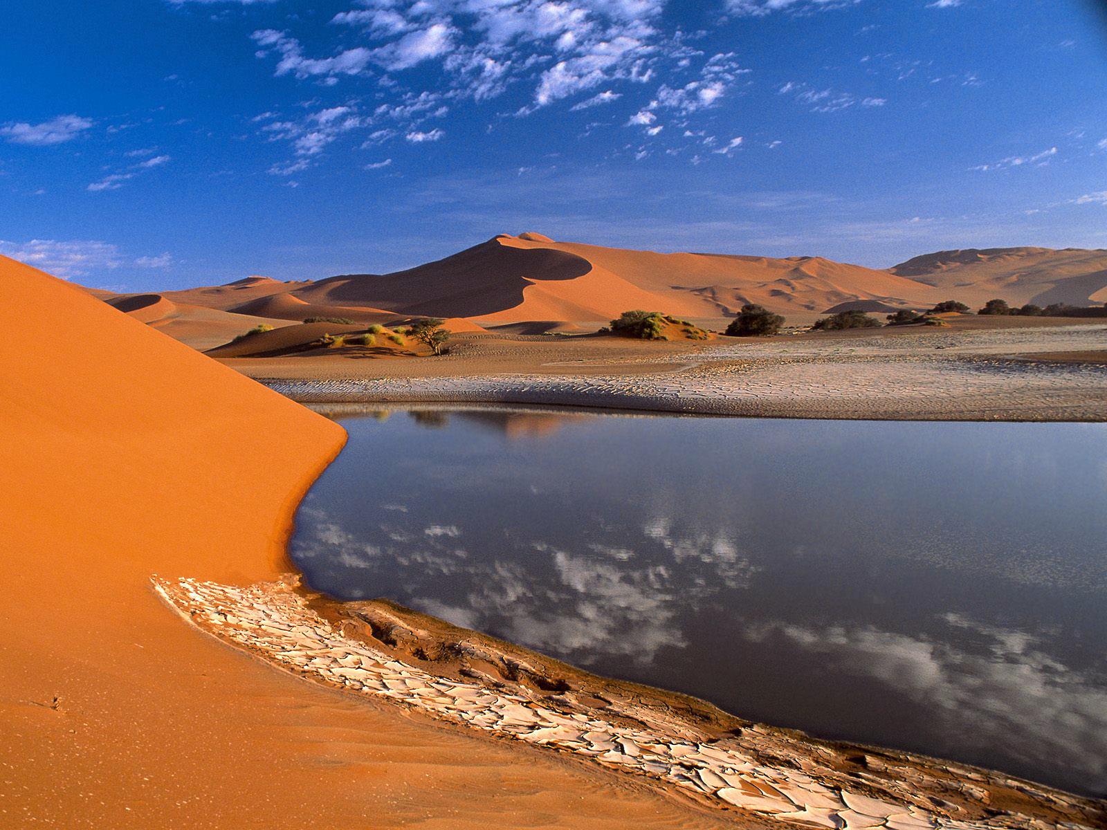 43+ Desert Oasis Wallpaper on WallpaperSafari