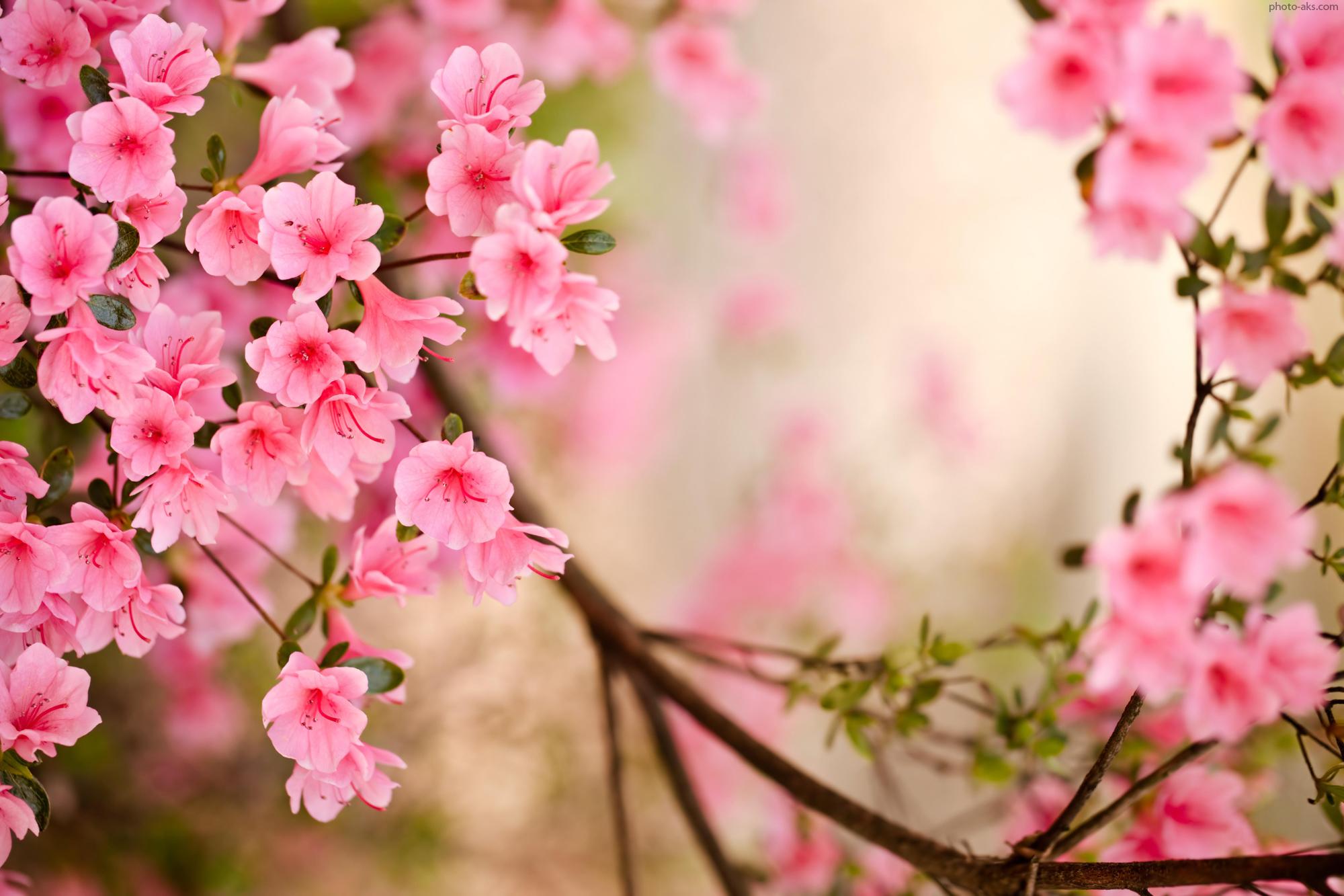 [48+] Early Spring Flowers Wallpaper on WallpaperSafari