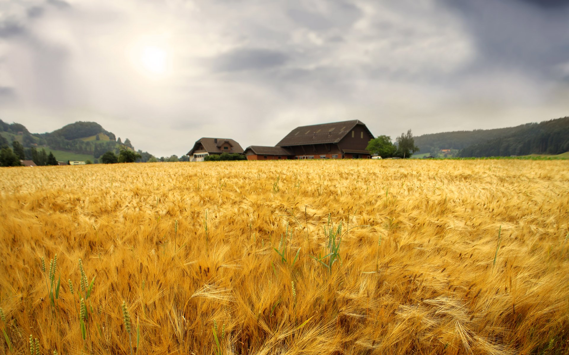 1200 Wallpapers Wheat Fields 1920X1200 Wallpaper 7 I write a lot 1920x1200