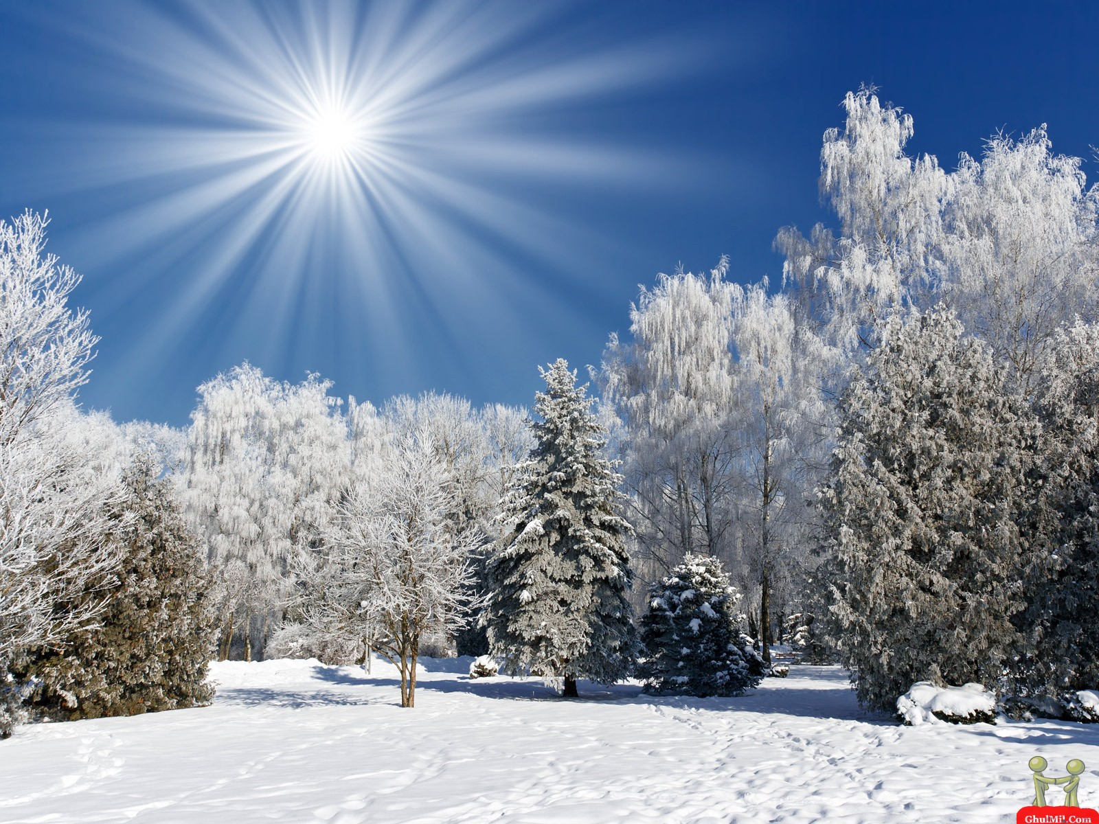 Sun Shines On Snow Trees Nature Wallpaper HD Wallpapers 1600x1200