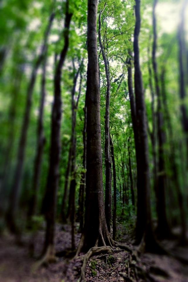 hd forest wallpaper download dark green