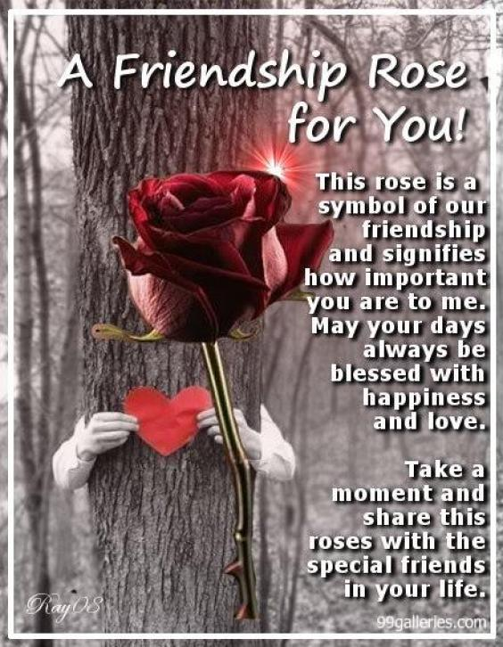 Wallpaper Rose For My Friend A Friendship Rose for You 564x726