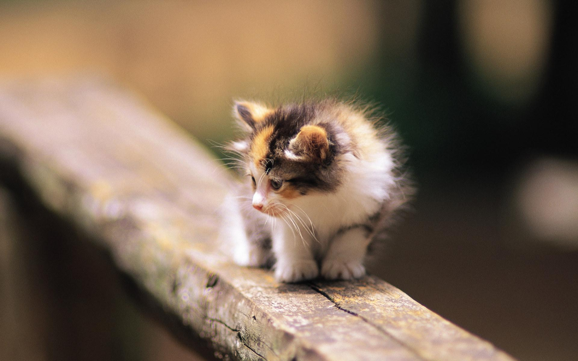 Kittens images Pretty Kittens in yard wallpaper photos 13937766 1920x1200