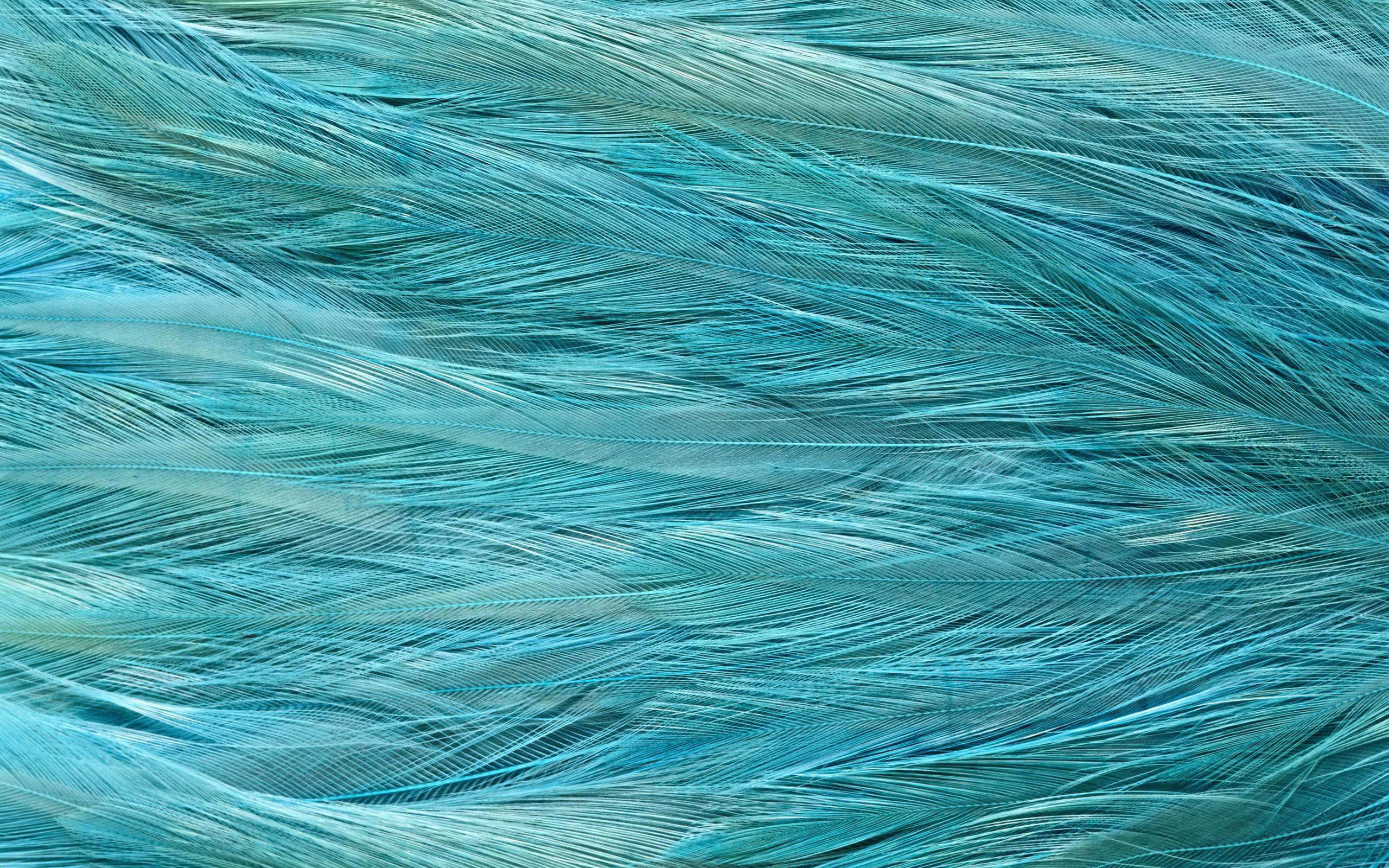 Feather texture wallpaper   1206871 2560x1600