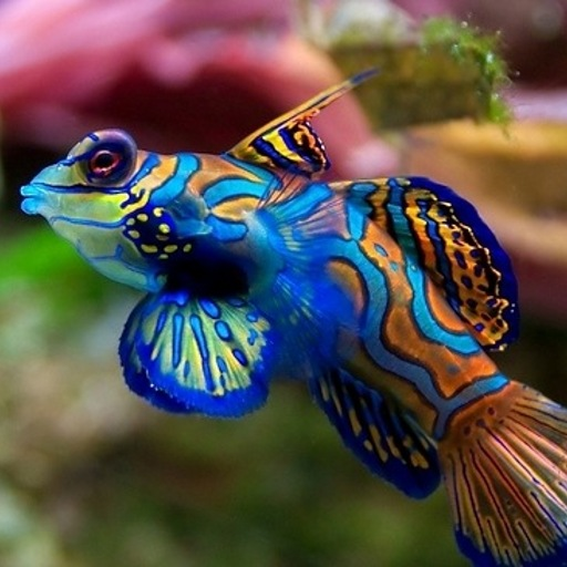 FREE][APP] Aquarium Live Wallpaper   Android Forums at AndroidCentral 512x512