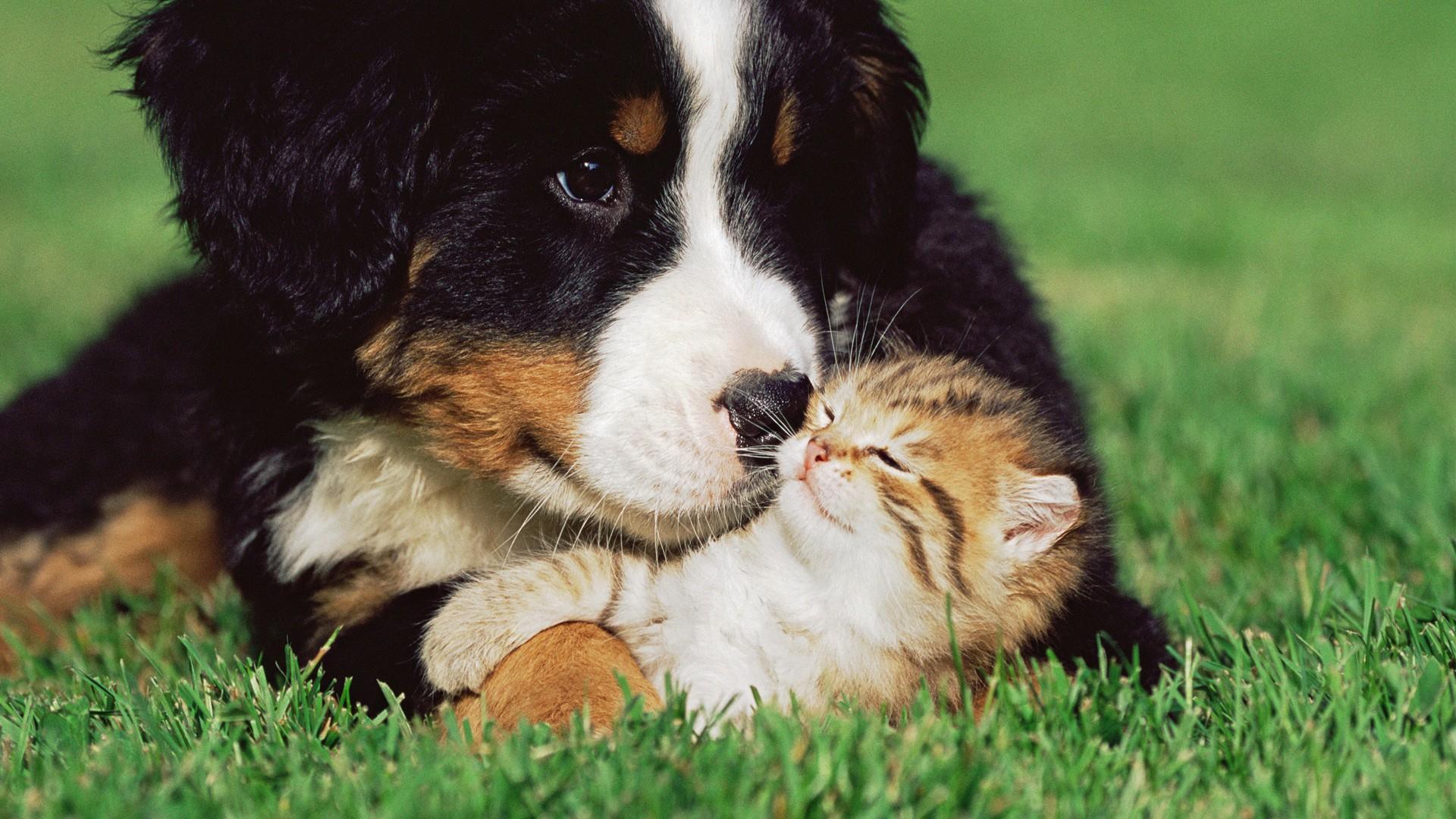 Cats Dogs Kittens Grass Animals puppy cute love wallpaper 1920x1080 1920x1080
