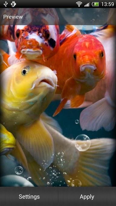 Koi Pond Live Wallpaper Desktop Wallpapersafari
