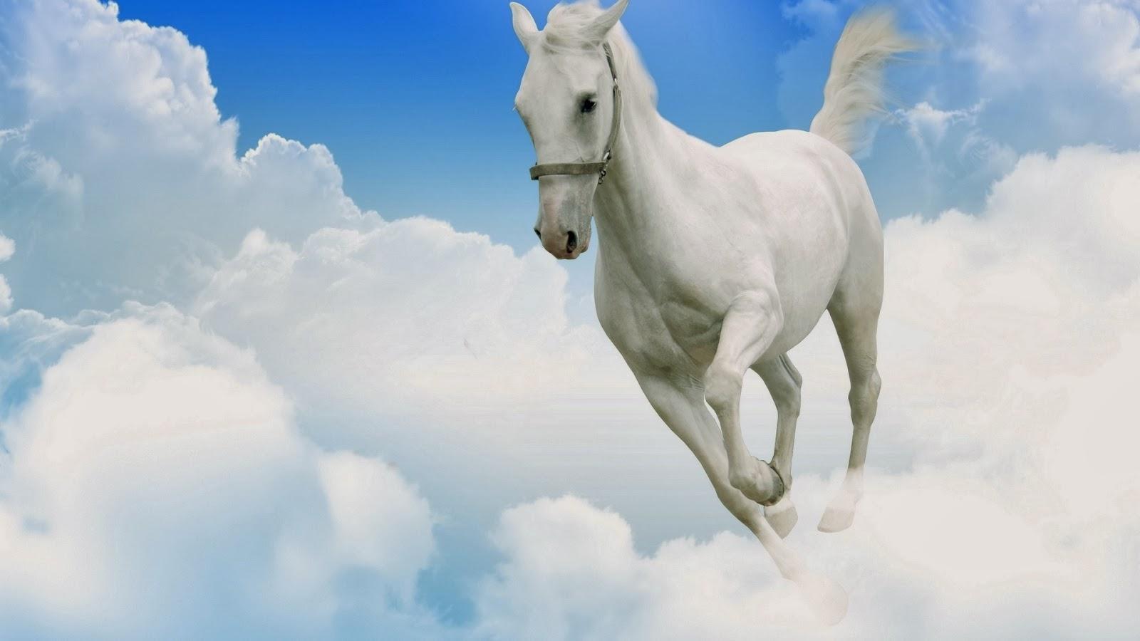White Horse Wallpaper For Desktop Wallpapersafari