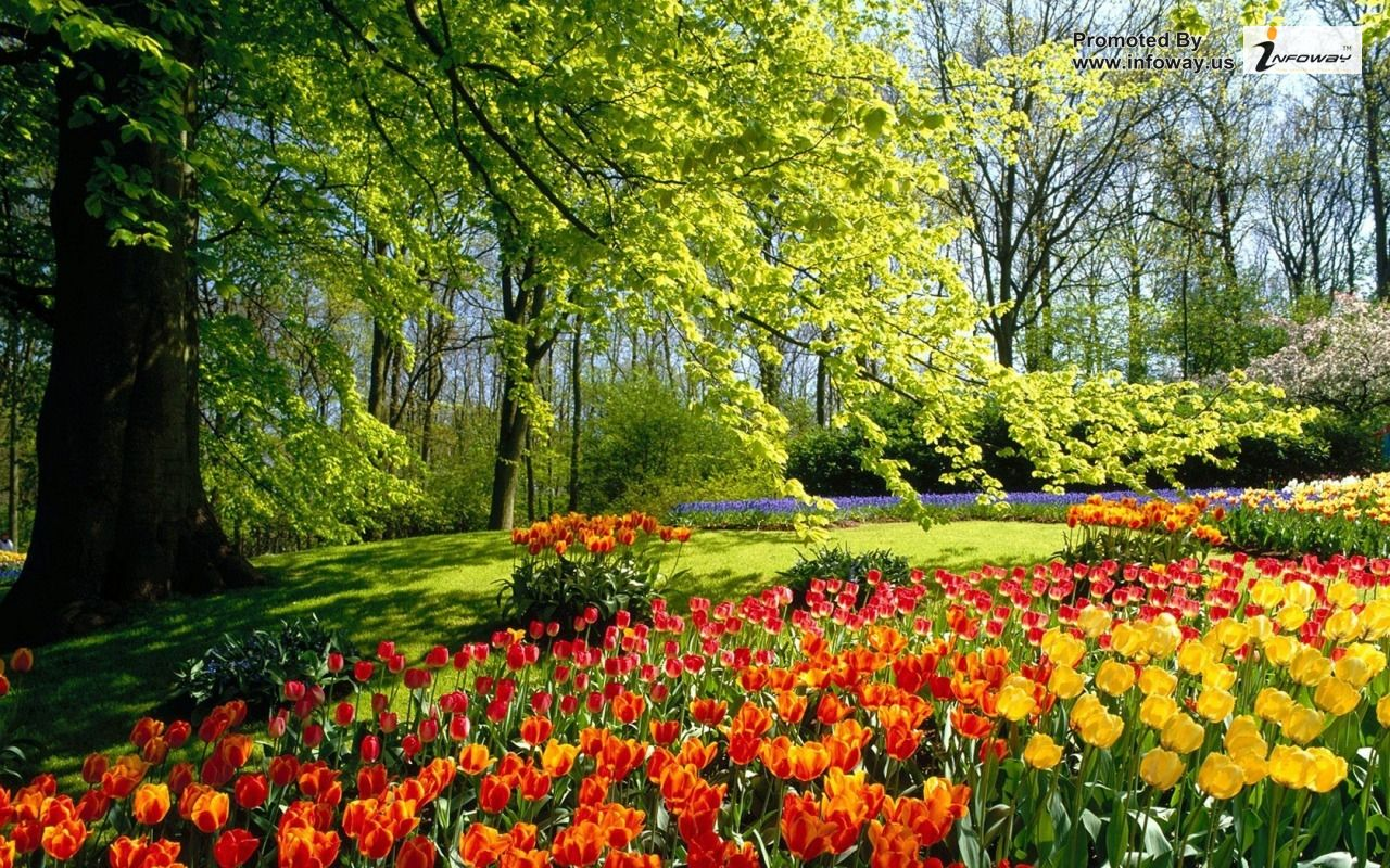 35 Beautiful Spring Pictures And Wallpapers: Beautiful Spring Nature Desktop Wallpaper