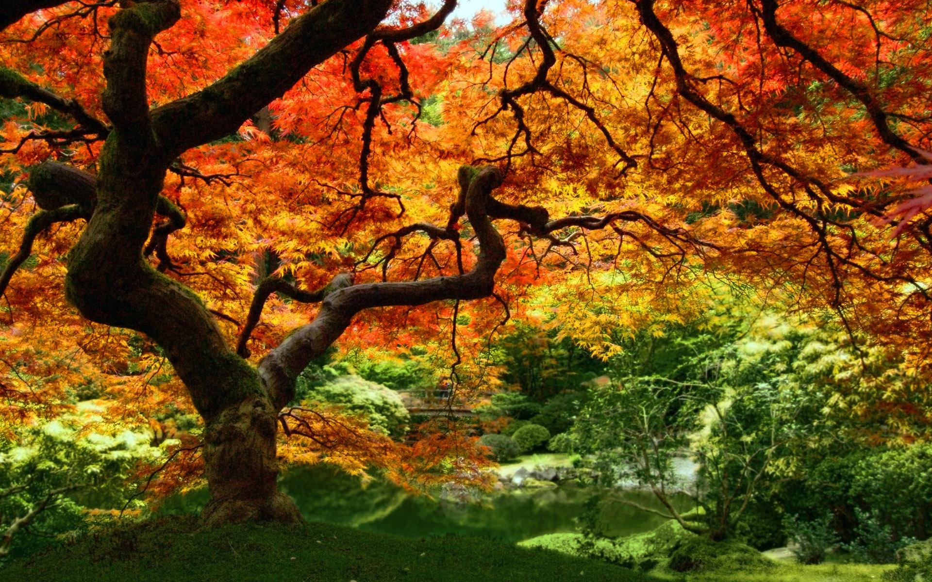 Fall Trees wallpaper 232721 1920x1200