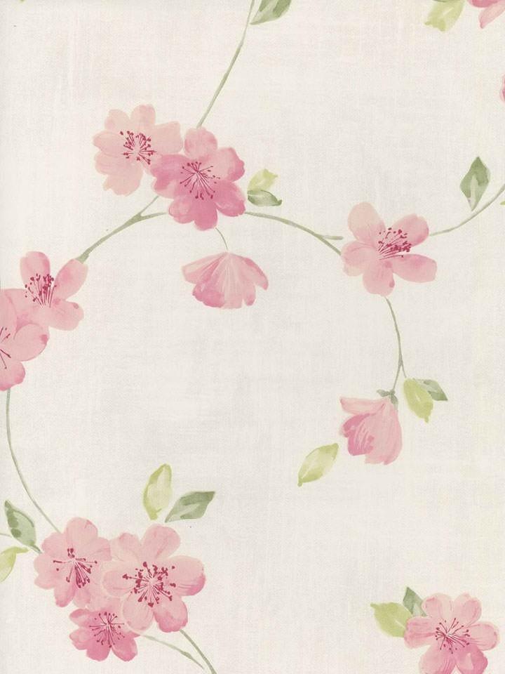 Pink Cherry Blossom Wallpaper Wallpapersafari