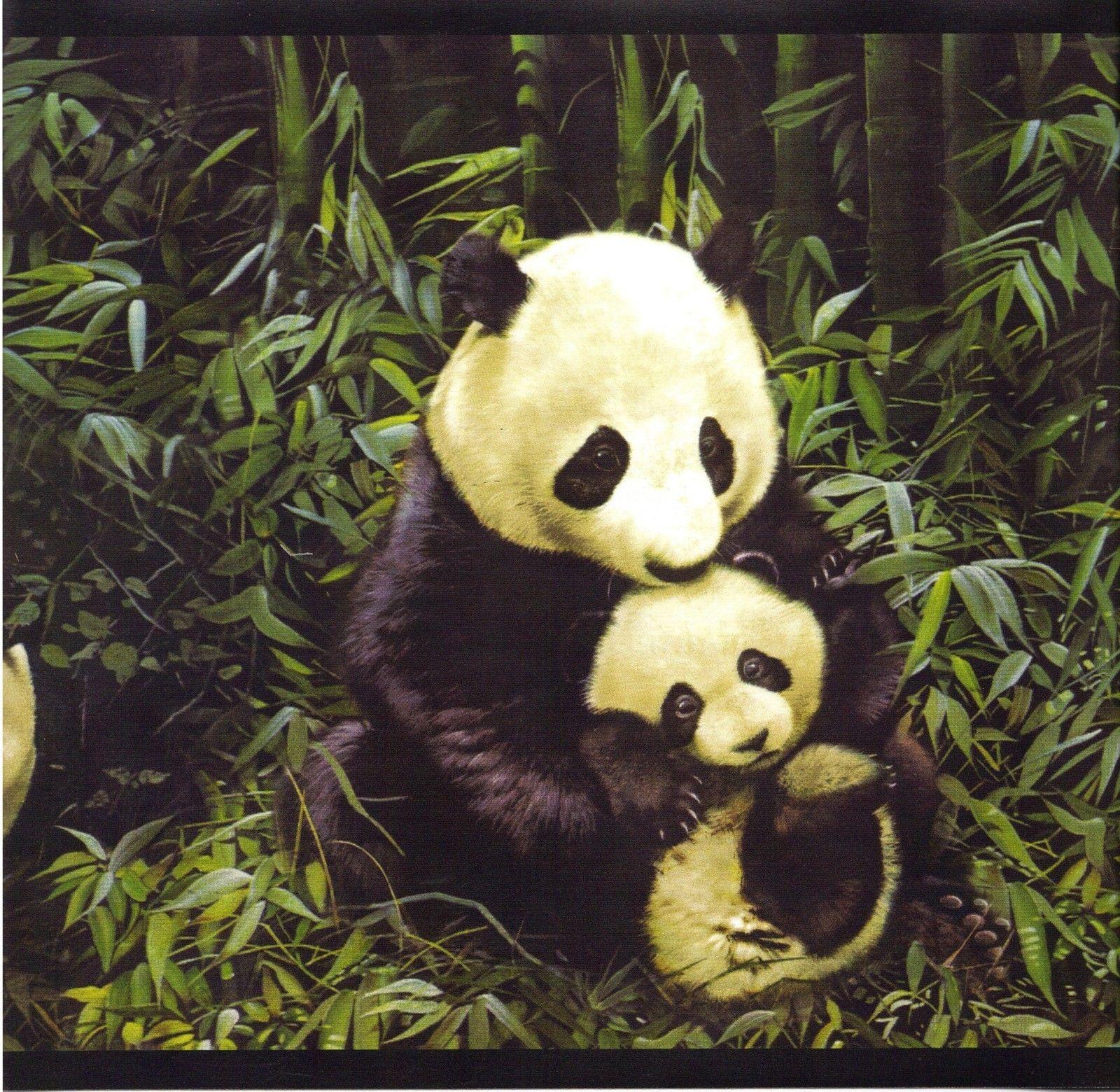 Panda bears bamboo jungle wallpaper border black bands GB9023 2B 1600x1560
