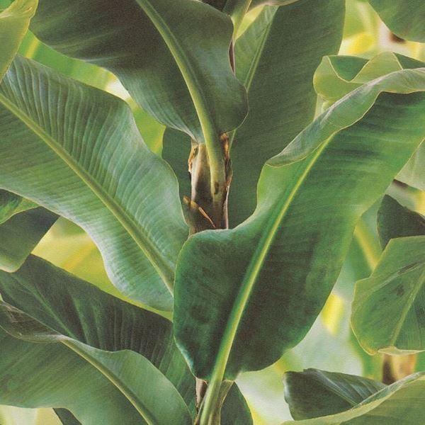 Tropical Leaf Green On Green 600x600