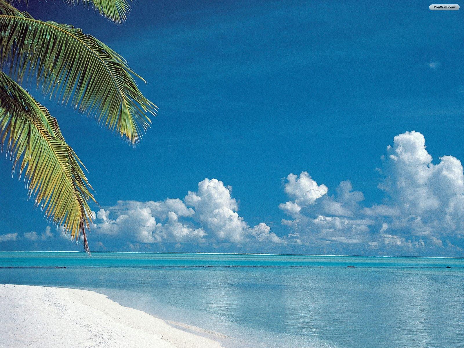 Free tropical screensavers and wallpaper wallpapersafari for Fond ecran plage gratuit