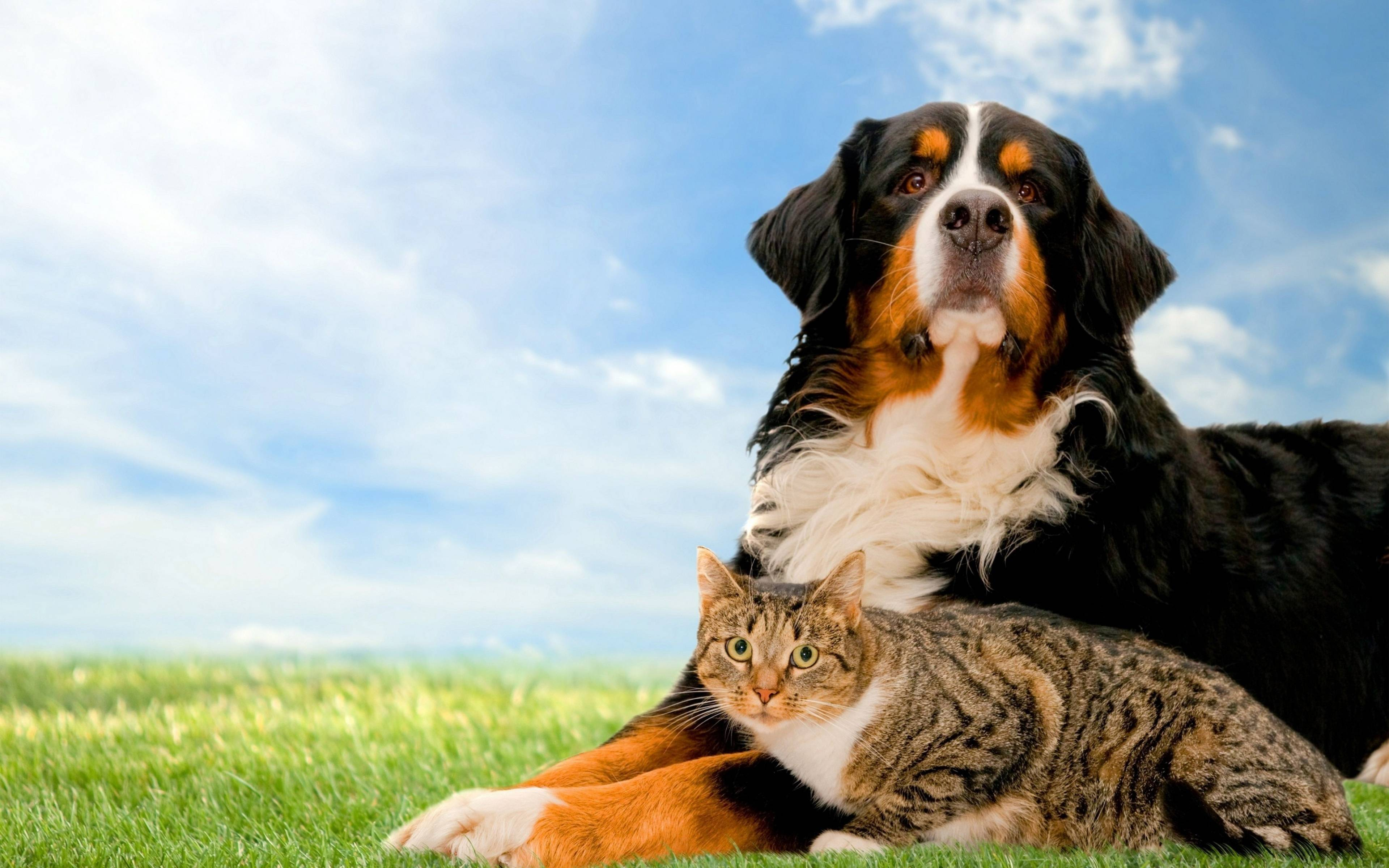 Dog And Cat Wallpapers 3840x2400