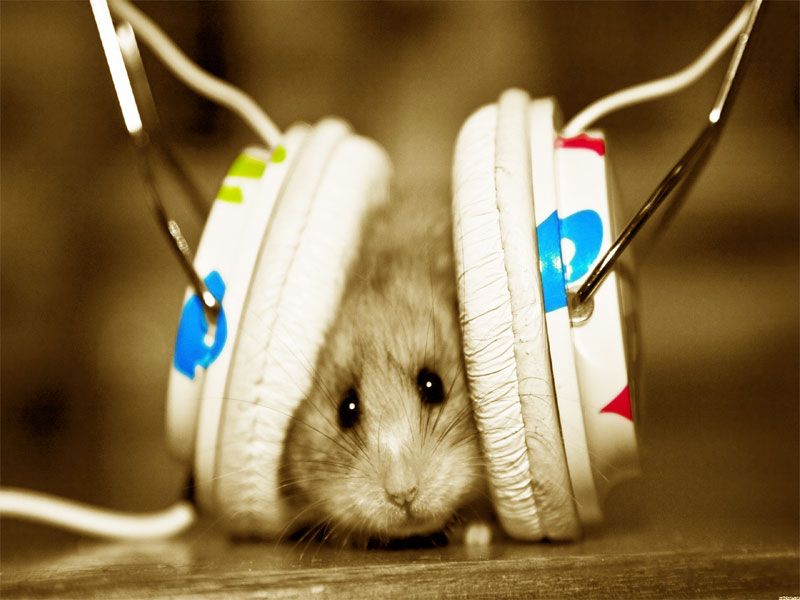 Wallpapers Download Download Latest Funny Wallpapers 2012 800x600