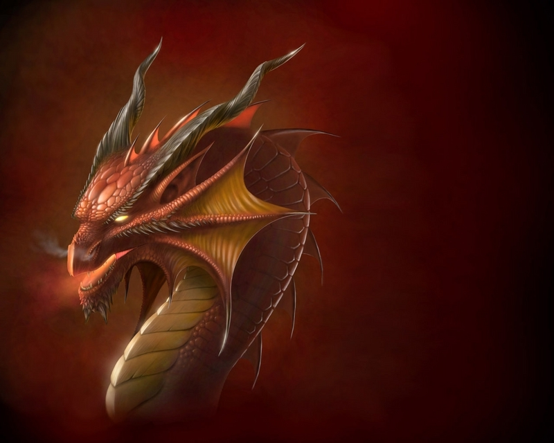 Dragon Directory Animated Dragon Plain Background Picture 800x640