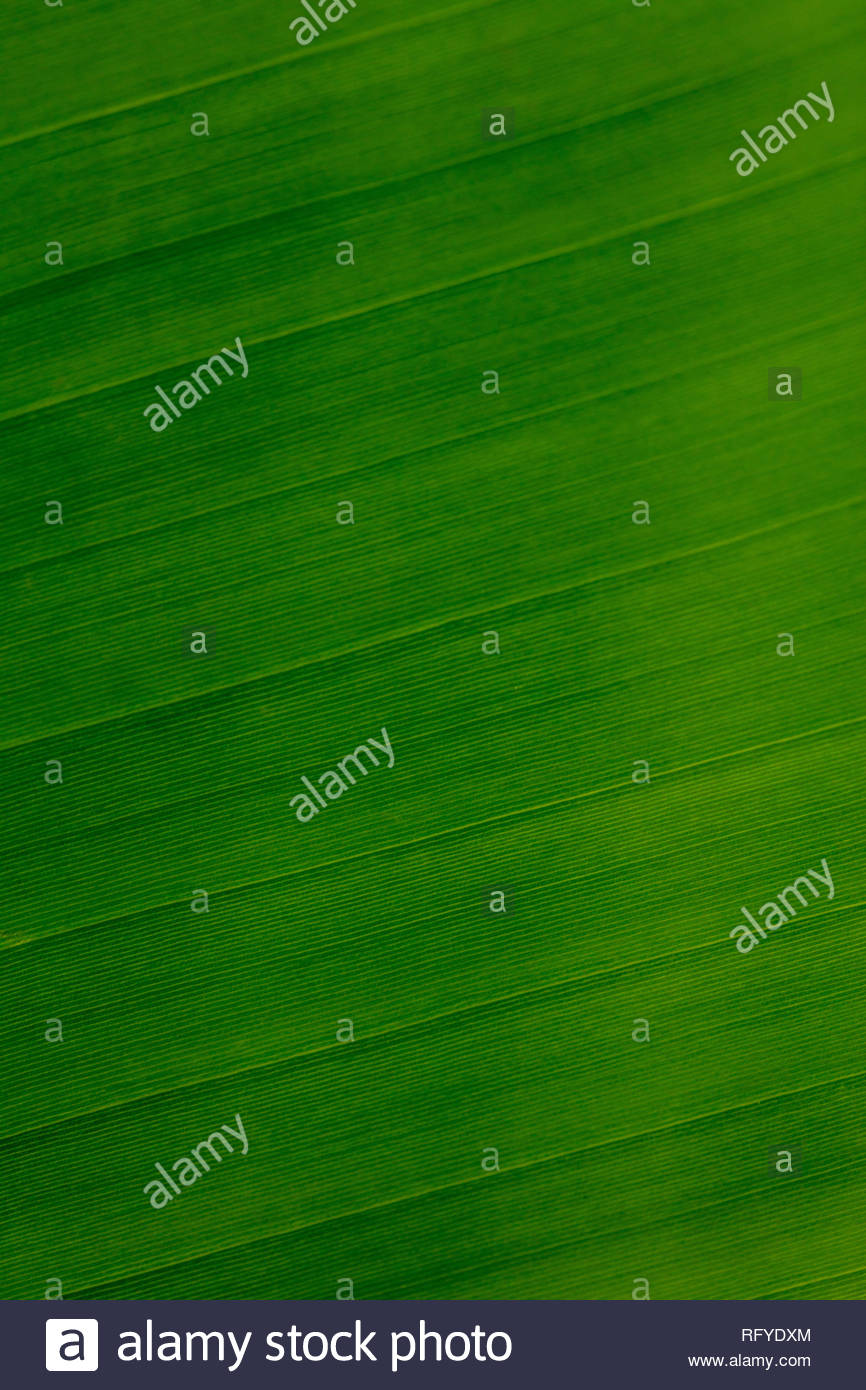 Green leaf green background wallpaper design Stock Photo 866x1390