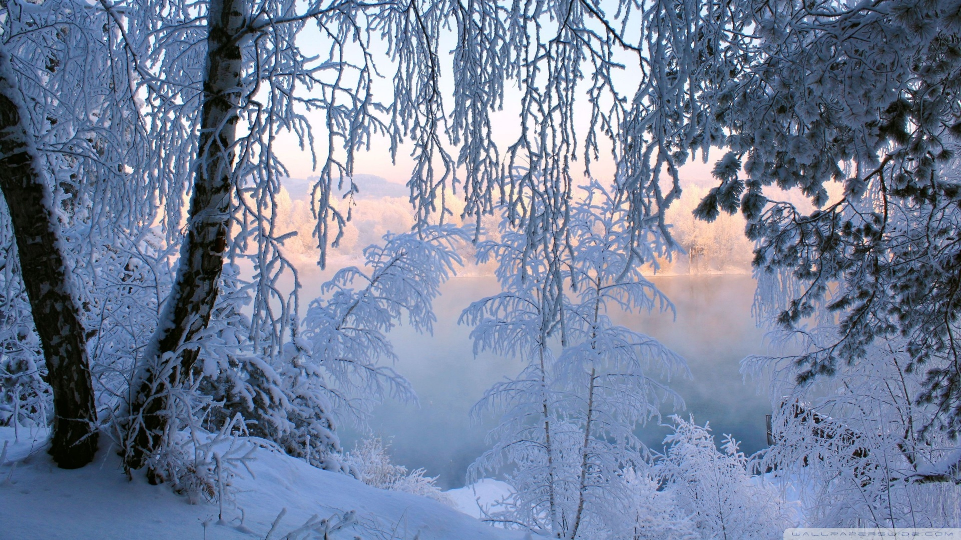Beautiful Winter Frost Wallpaper 1920x1080 Beautiful Winter Frost 1920x1080