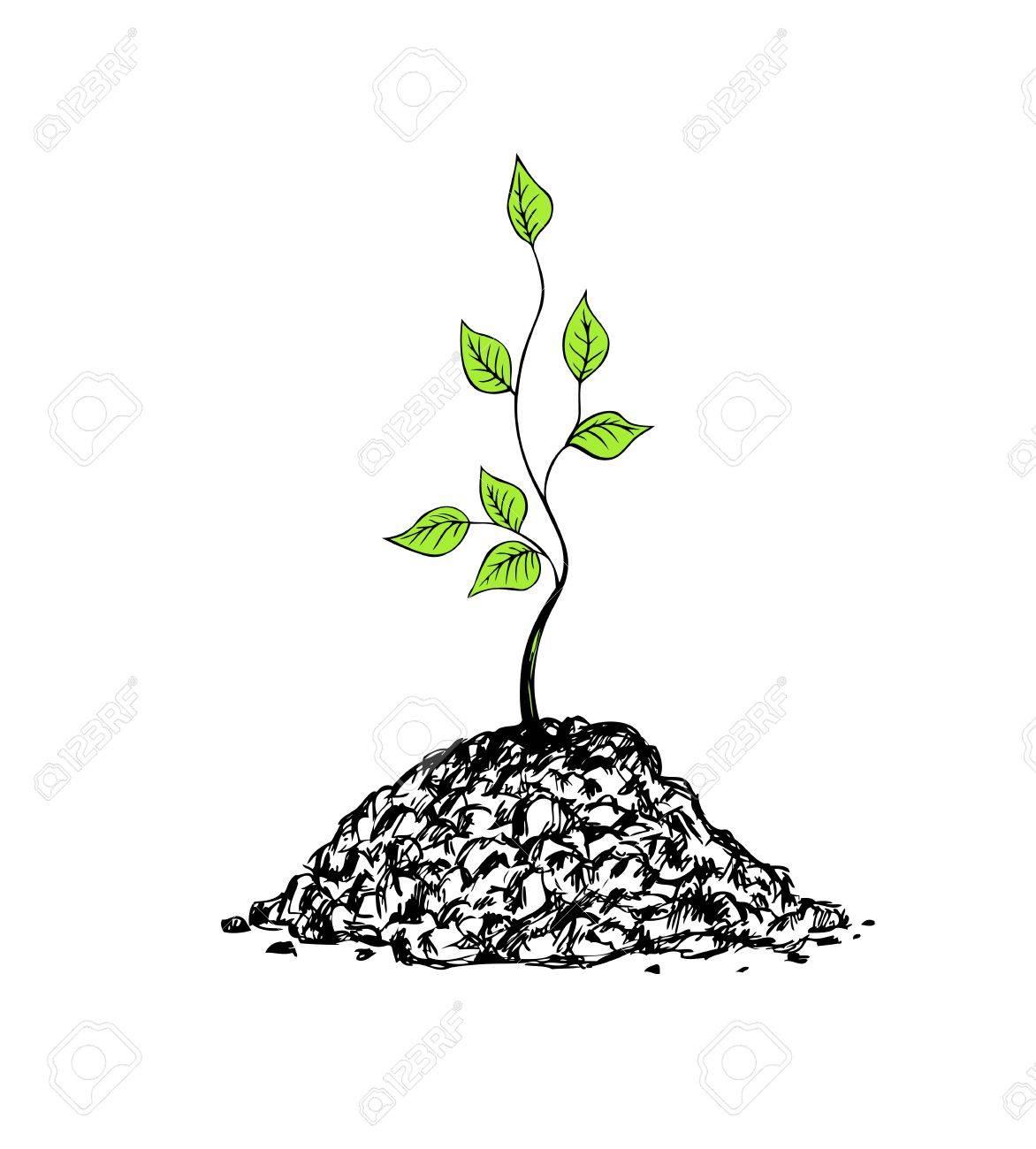 Illustration Of Tree Sapling On White Background Royalty 1172x1300