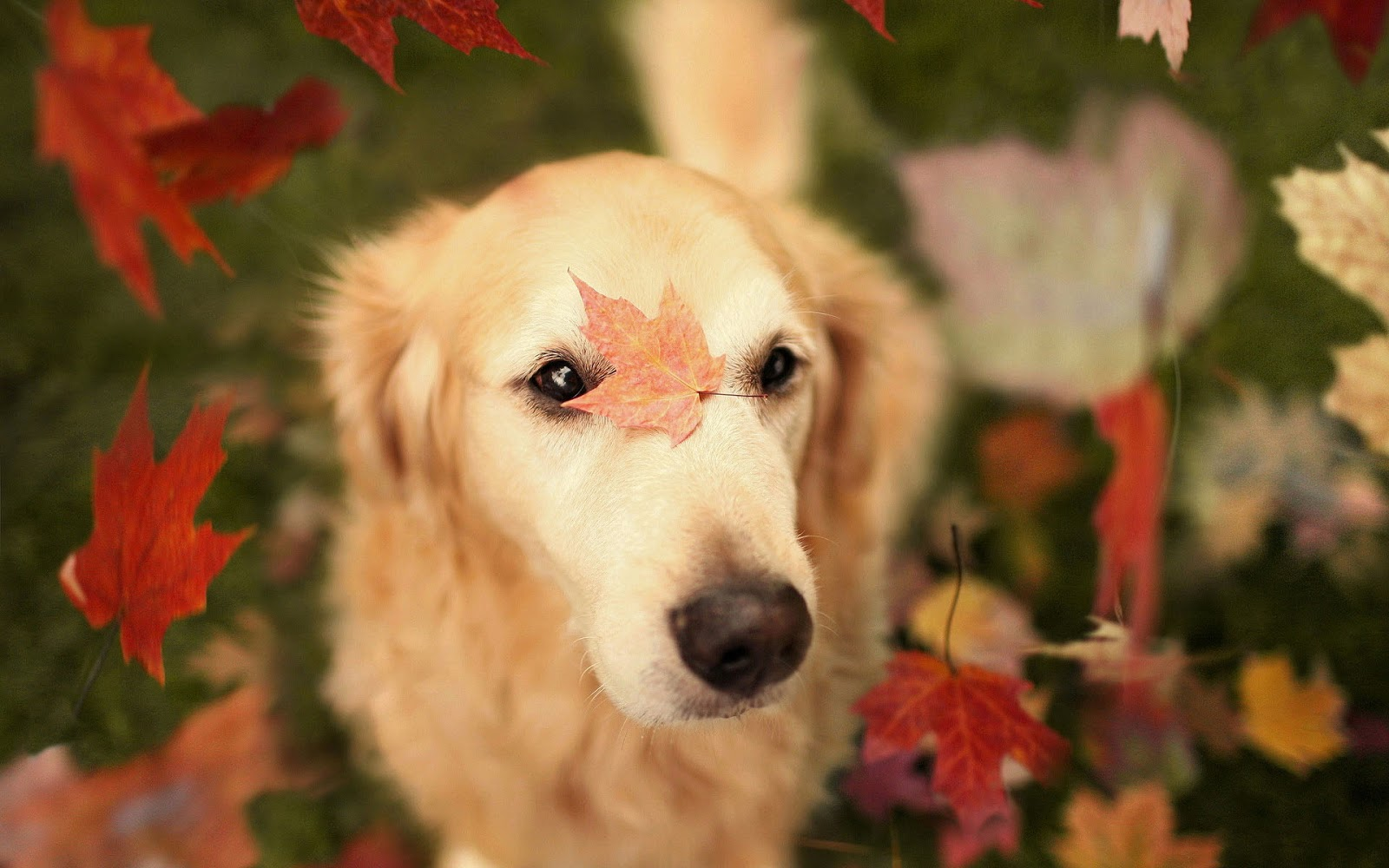 Fall Wallpaper With Dogs Amazing Wallpapers 1600x1000