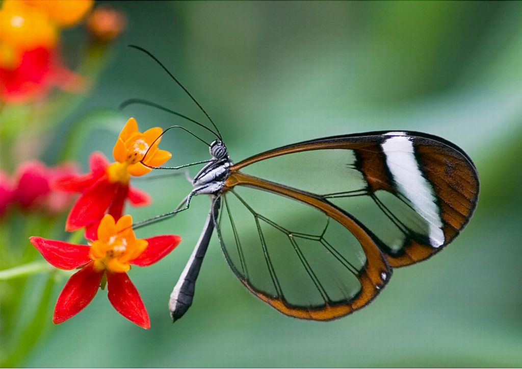 Related Pictures cool butterfly green neon light mariposa wallpaper 1024x723