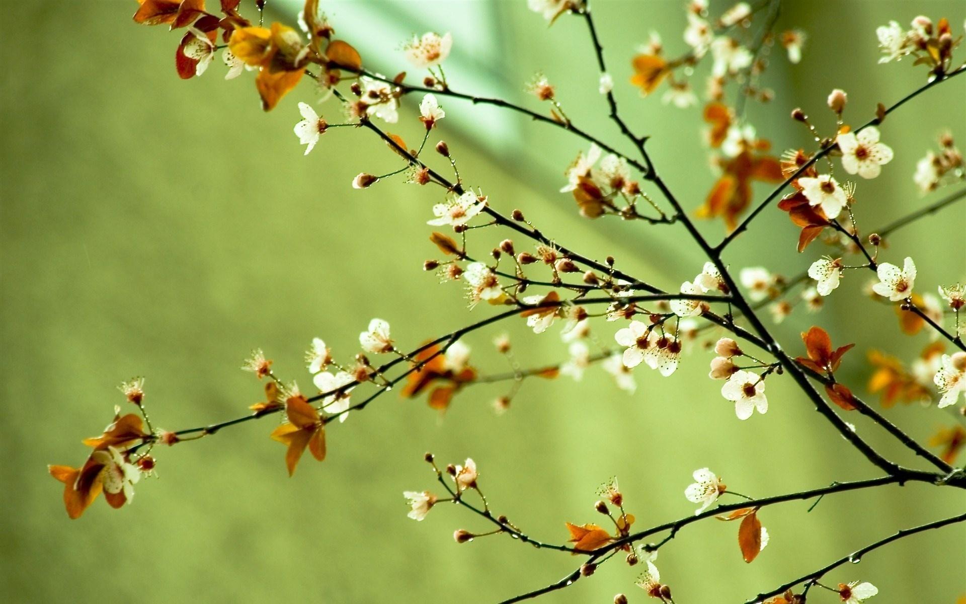 Spring Wallpaper High Res Wallpapersafari
