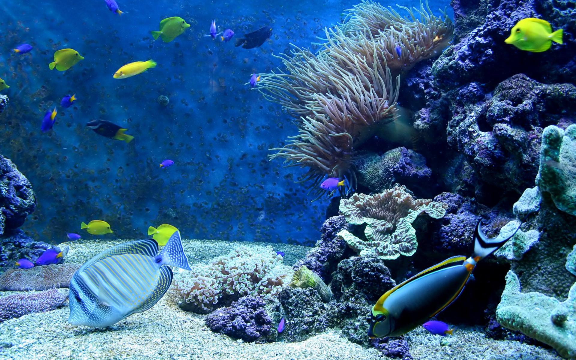 coral reef wallpaper widescreen wallpapersafari. Black Bedroom Furniture Sets. Home Design Ideas