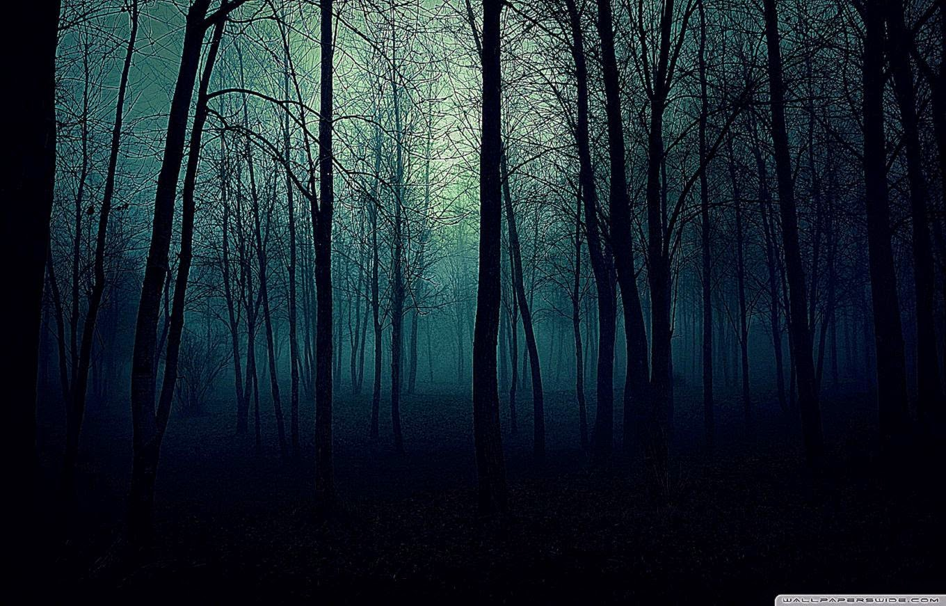 45 Dark Forest Wallpaper Hd On Wallpapersafari