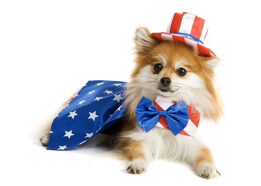 4th of July Safety for Your Dog American Dog Blog 900x643