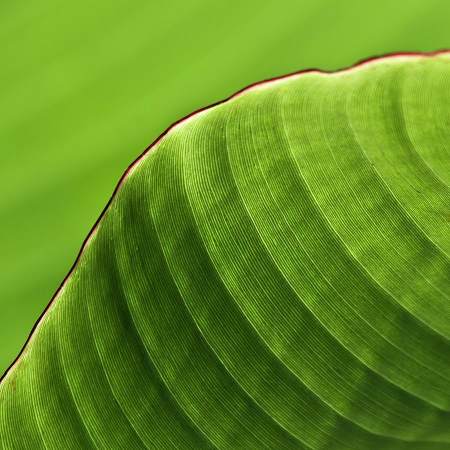 Related Banana Leaf Wallpaper Tropical Pattern Tropical Leaf 900x900
