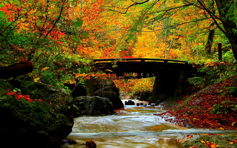 autumn beautiful Splendor Nature Forests HD Desktop Wallpaper 800x500