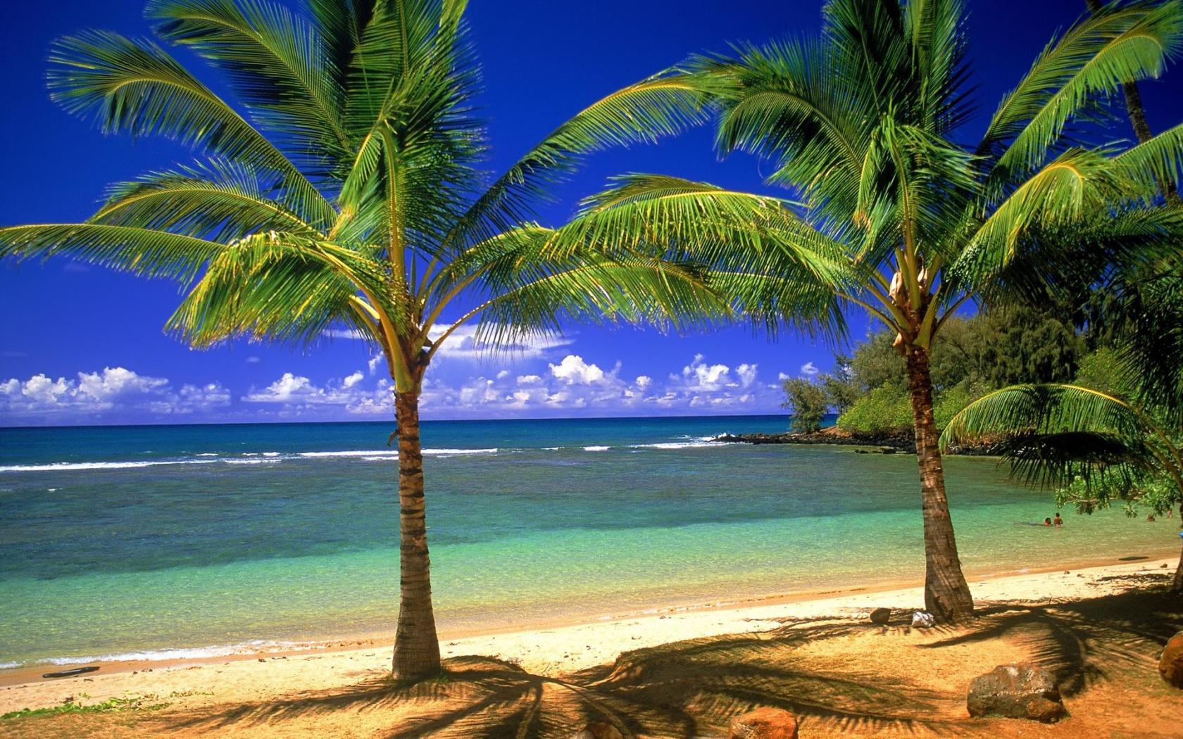 1680x1050 Palms on the beach desktop PC and Mac wallpaper 1680x1050
