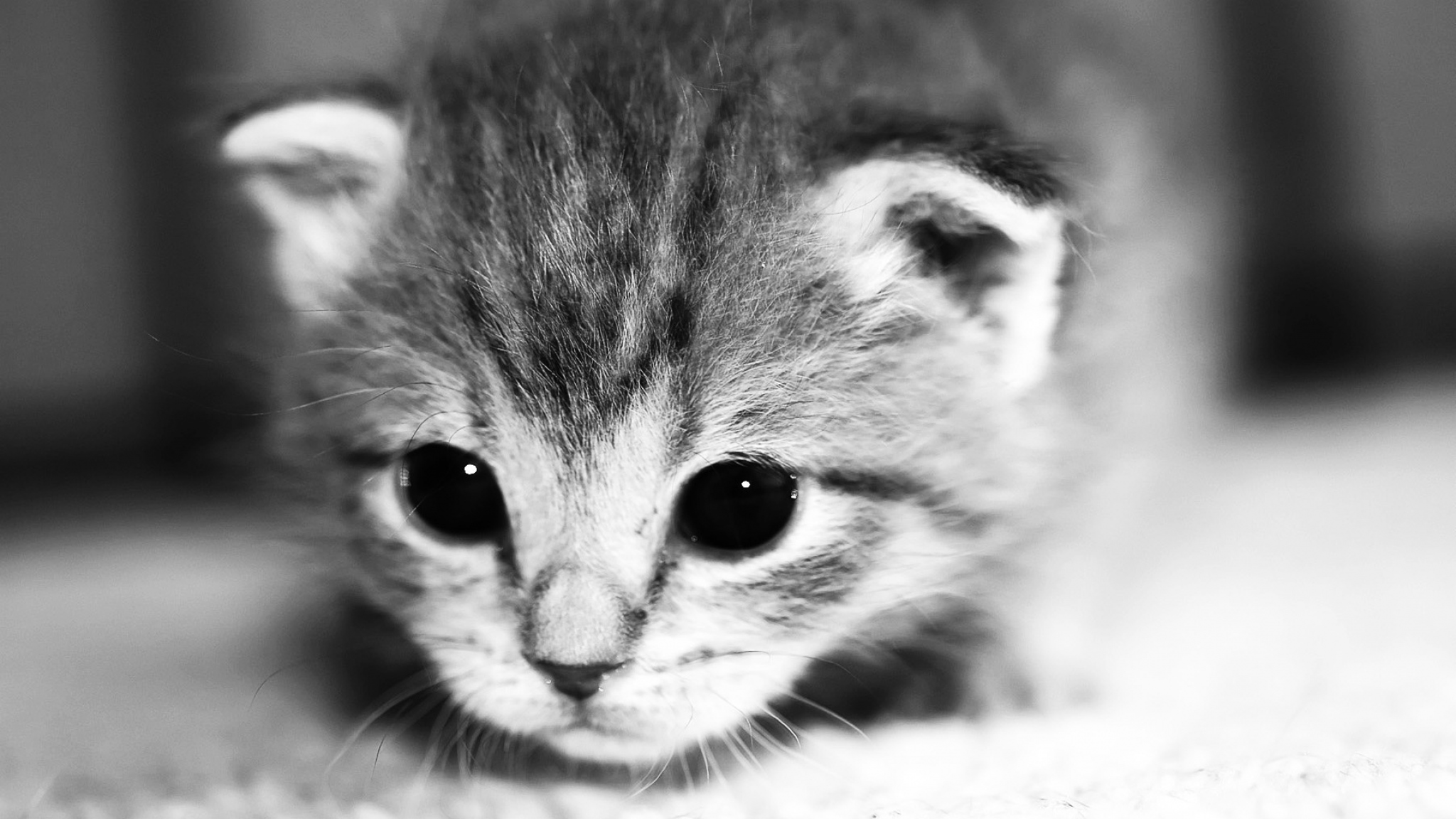 Download Wallpaper 2048x1152 Kitten Face Eyes Cute HD HD Background 2048x1152