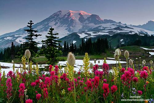 Mount Rainier Meadow Flowers Wallpaper Wallpapersafari