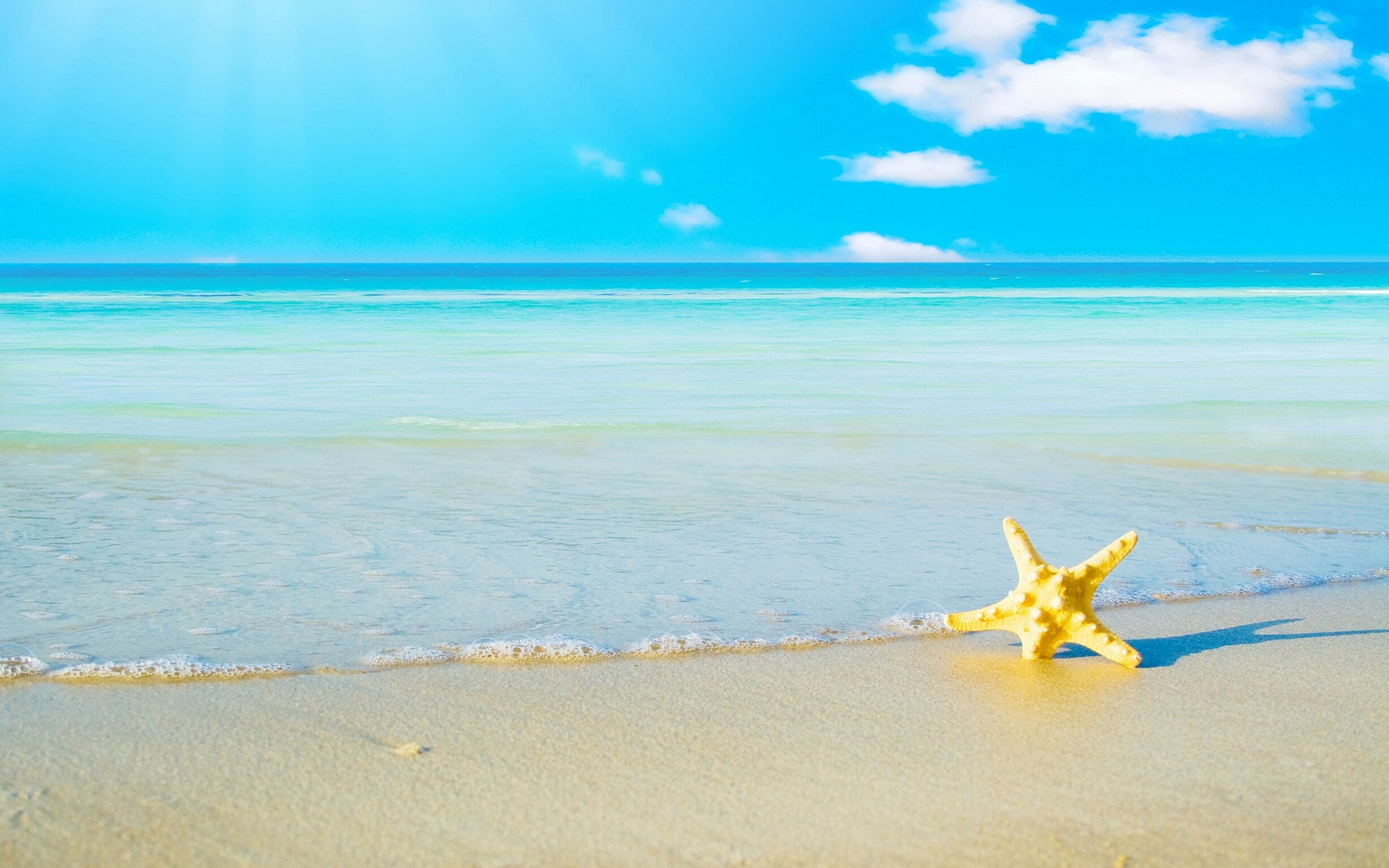 Beach Screensavers And Wallpapers Starfish On The 2560x1600
