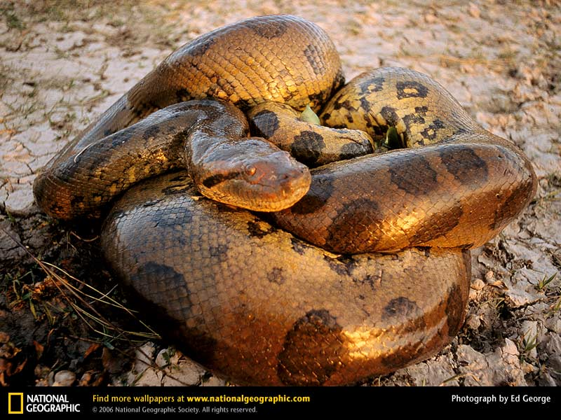 Wallpaper Wallpapers Download Animals   National Geographic 800x600