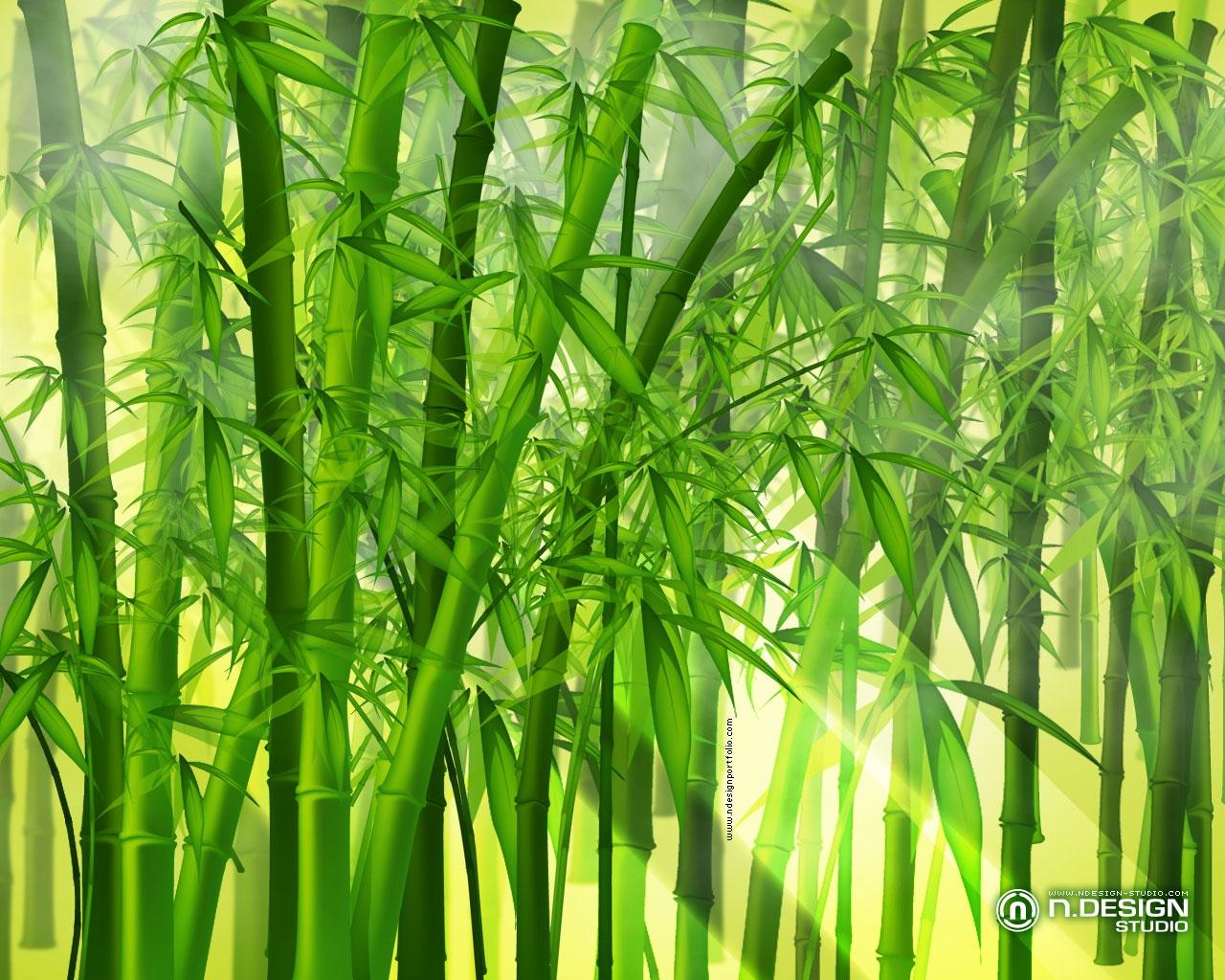 Bamboo Wallpaper Border