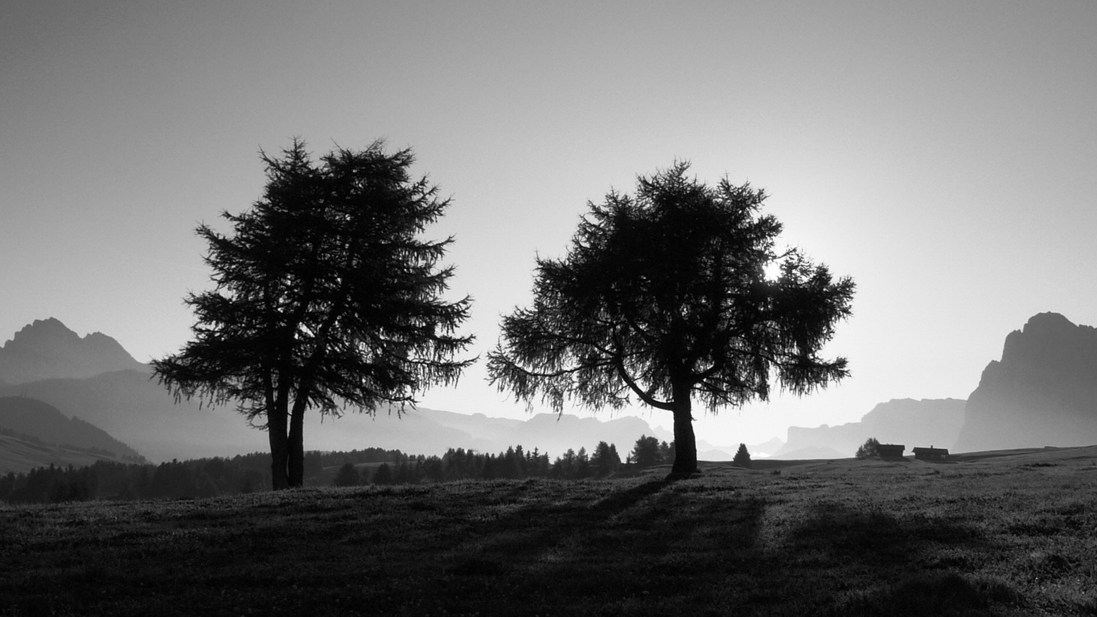 Download Wallpaper 3840x2160 trees slope black and white 4K Ultra HD 3840x2160