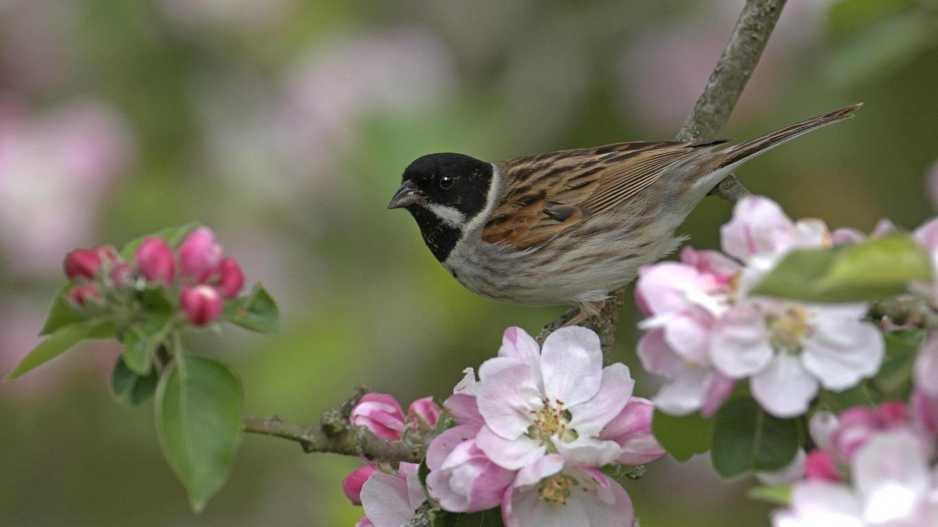 bird and flowers   134213   High Quality and Resolution Wallpapers 1366x768