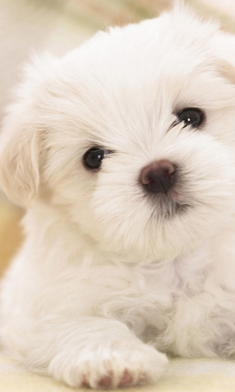 puppy wallpapers and screensavers 480x800