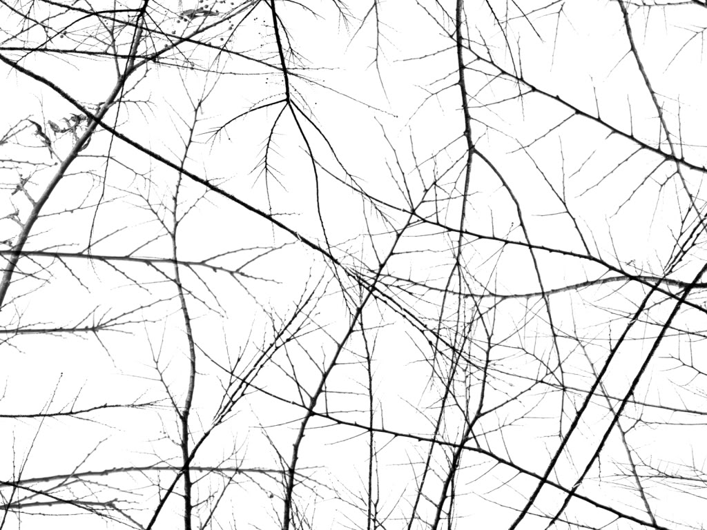Branches Background   Branches Wallpaper 1024x768