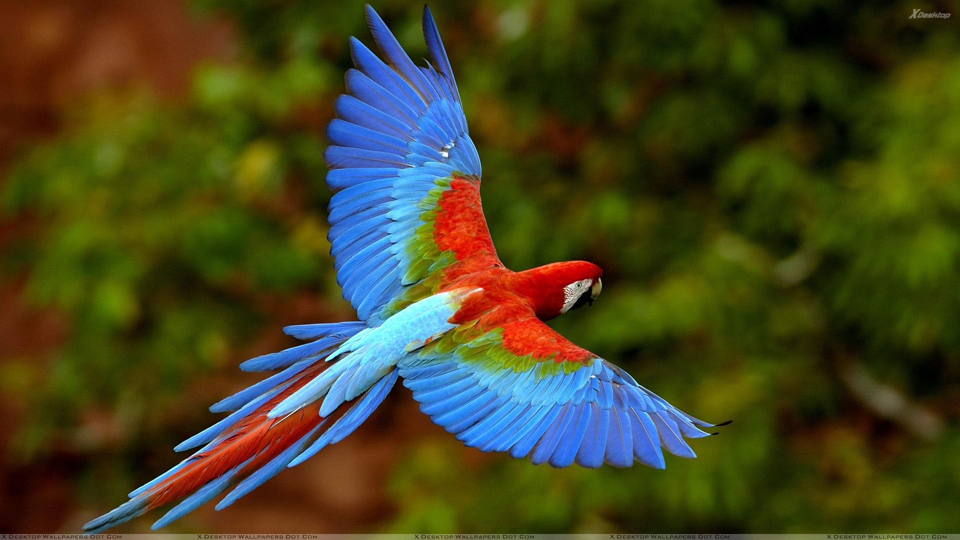 Flying Birds Wallpapers Photos Images in HD 1920x1080