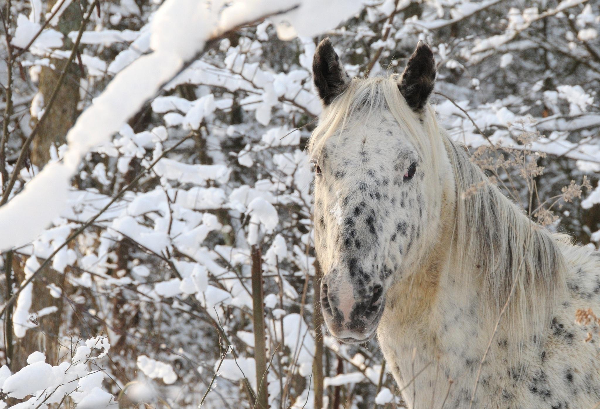 Horse head face winter wallpaper 2048x1396 169579 WallpaperUP 2048x1396