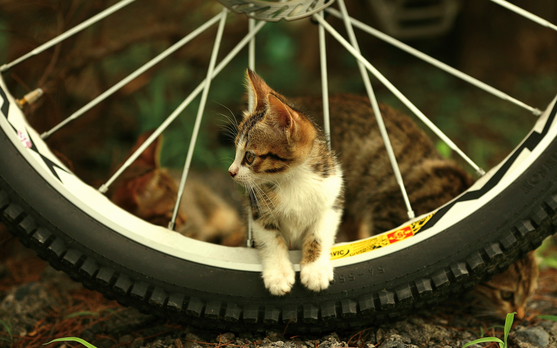 Amazing Beautiful Cute Kitten in Cycle Wheel Wallpaper HD Wallpapers 1920x1200