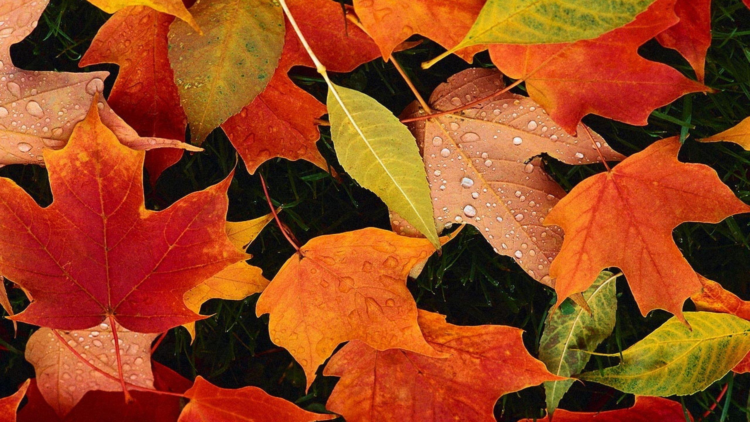 Good Wallpaper Mac Autumn - UTl0p8  Perfect Image Reference_316450.jpeg